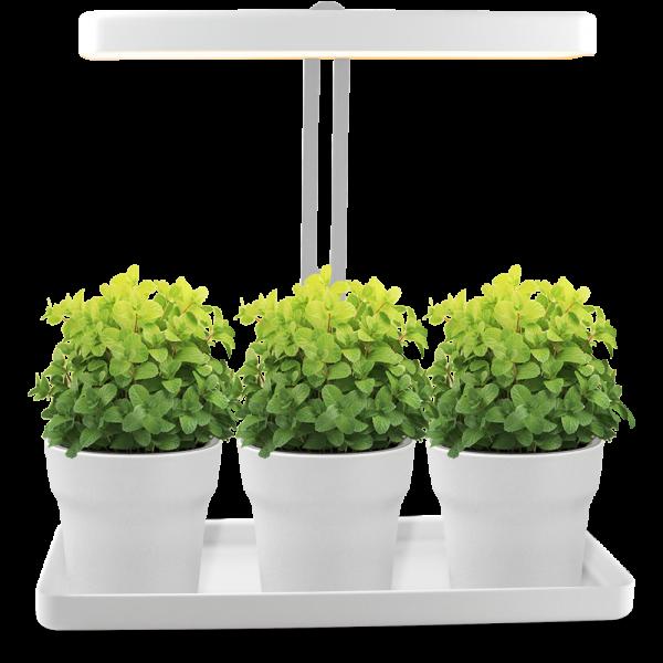 LED Mini-Garten in T-Form
